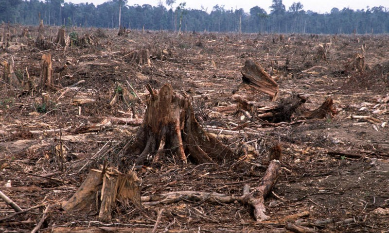 deforestation-causes-HI_104236 (1) (1)
