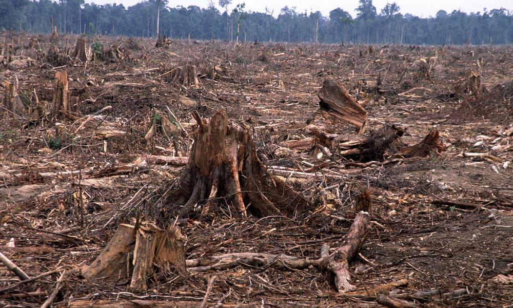 deforestation-causes-HI_104236 (1) (1)